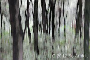 The_natural_eye_04.JPG
